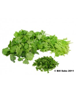 Cilantro Flavor Powder