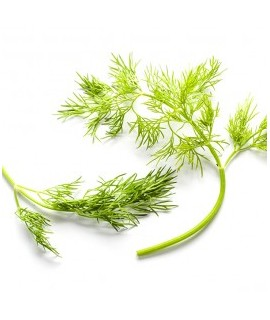 Dill Flavor Concentrate
