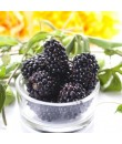 Black Raspberry Flavor Oil