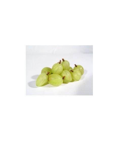 Gooseberry Flavor Oil