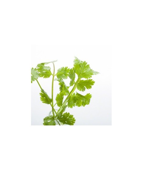 Herb Flavor Oil