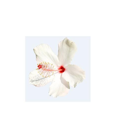 Hibiscus Flavor Oil