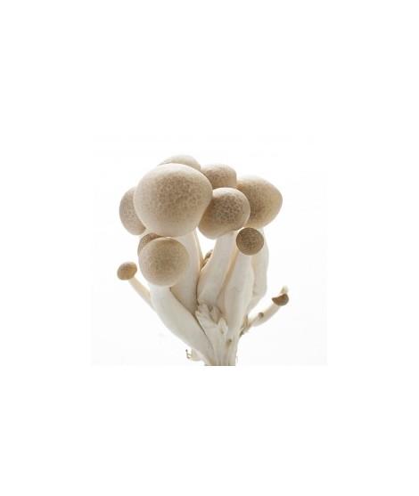 Mushroom Flavor Oil