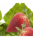 Natural Strawberry Basil Flavor Oil
