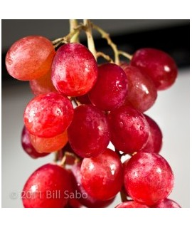 Grape Extract, Natural