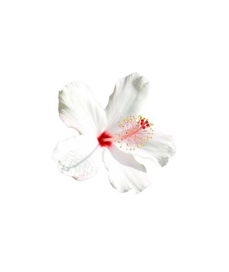 Hibiscus Flavor Extract