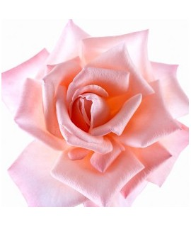 Rose Petal Extract, Natural