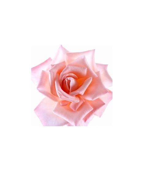 Rose Petal Flavor Extract