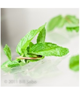 Spearmint Extract, Natural