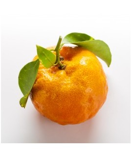 Tangerine Extract, Natural