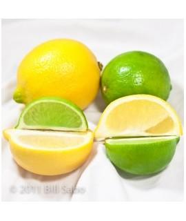 Organic Lemon Lime Syrup