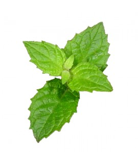 Menthol Organic Flavor Emulsion for High Heat Applications