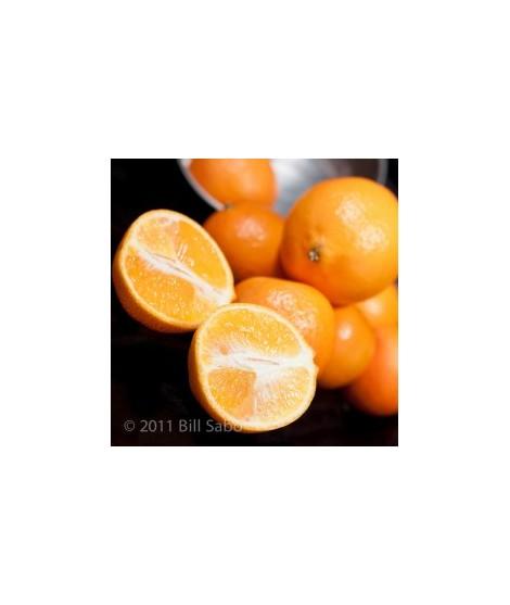 Mandarin Orange Flavor Syrup