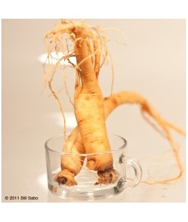 Ginseng Extract, Natural