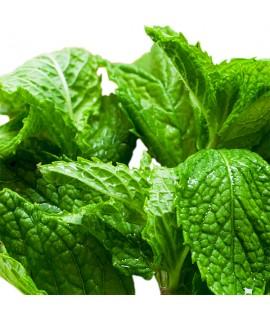 Organic Menthol Flavor Oil for Lip Balm