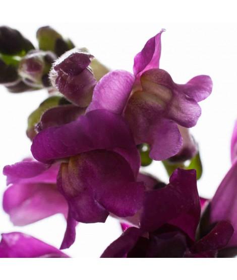 Violet Organic Flavor Emulsion for High Heat Applications