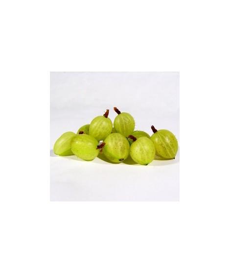 Organic Gooseberry Flavor Oil