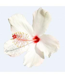 Organic Hibiscus Flavor Concentrate