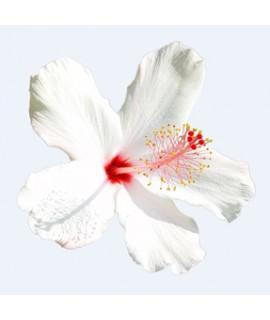 Organic Hibiscus Flavor Oil