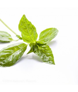 Organic Basil Flavor Concentrate