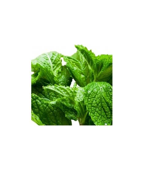 Organic Menthol Flavor Oil