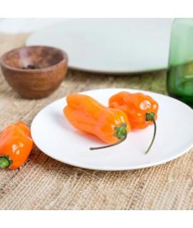 Organic Habanero Mango Flavor Concentrate