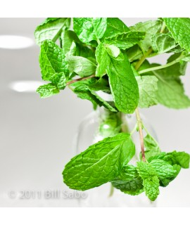 Organic Mint Flavor Concentrate