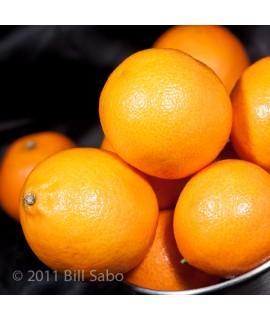 Organic Orange Chocolate Liqueur Flavor Concentrate