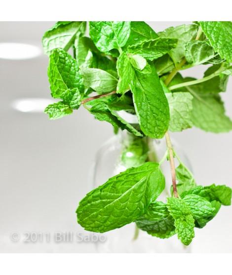 Organic Spearmint Flavor Concentrate