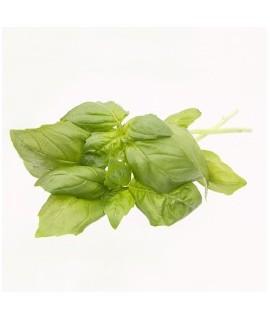Organic Basil Flavor Powder