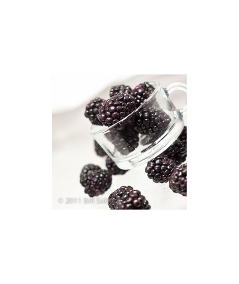 Organic Blackberry Flavor Powder