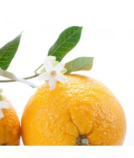 Organic Orange Blossom Flavor Oil For Chocolate (Kosher, Vegan, Gluten-Free, Oil Soluble)