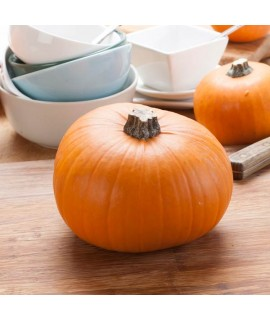 Organic Pumpkin Flavor Oil For Chocolate (Kosher, Vegan, Gluten-Free, Oil Soluble)