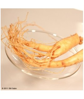 Ginseng Panax Powder Extract