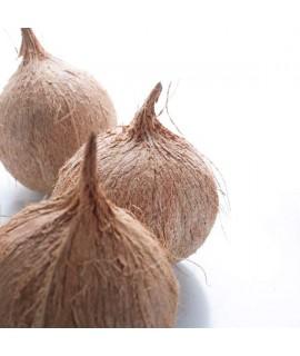 Organic Coconut Snow Cone Syrup