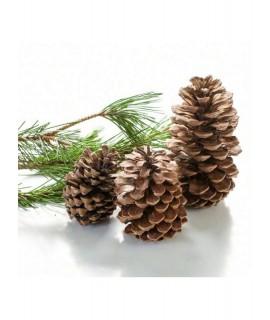 Organic Christmas Fragrance Oil (Alcohol Soluble)