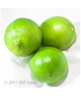 Organic Key Lime Flavor Powder
