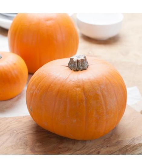 Pumpkin Flakes Drum Dried
