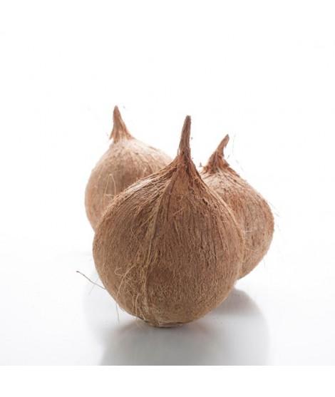 Coconut Oil 92 Degree Melt Point