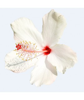 Organic Hibiscus Fragrance Emulsion (Water Soluble)