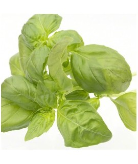 Ground Basil Leaves