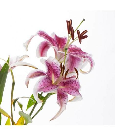Organic Hawaiian Bouquet Fragrance Oil (Alcohol Soluble)