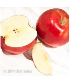 Apple Fragrance Emulsion (Water Soluble)