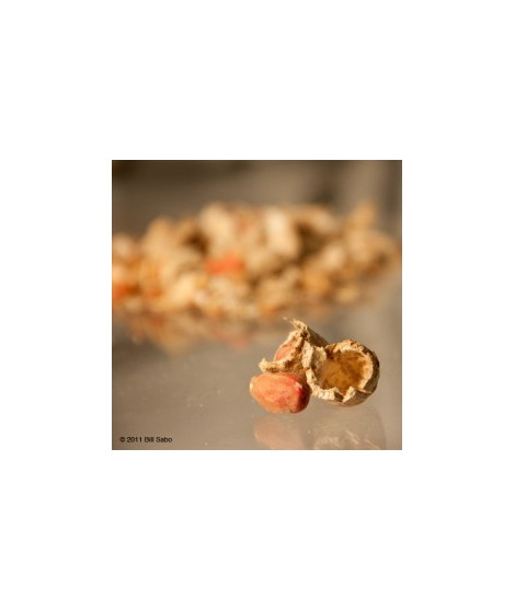 Organic Peanut Flavor Powder