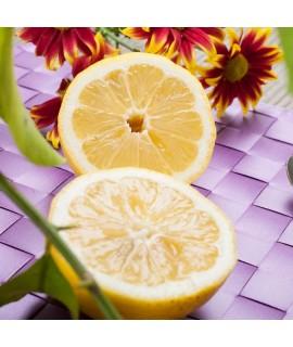Organic Lemon Sugar Fragrance Oil (Oil Soluble)