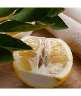 Organic Lemon Verbena Fragrance Oil (Oil Soluble)