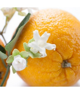 Organic Orange Blossom Fragrance Oil (Oil Soluble)
