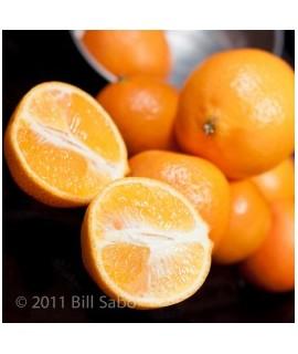 Mandarin Orange Snow Cone Flavor Syrup