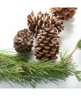 Pine Fragrance Powder