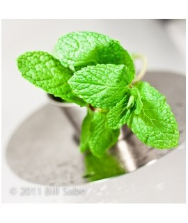 Organic Spearmint Flavor Powder